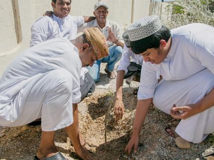Plantation des arbres à encens à Oman