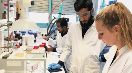 recherches sur l'encens naturel d'Oman